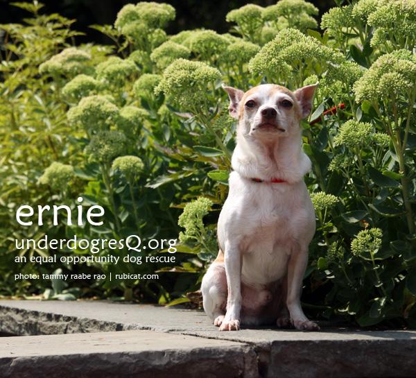 Ernie, available through Underdog ResQ.org
