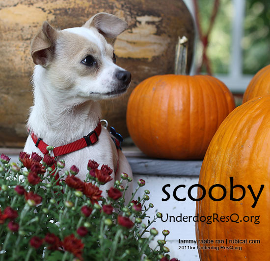 20110928_scooby