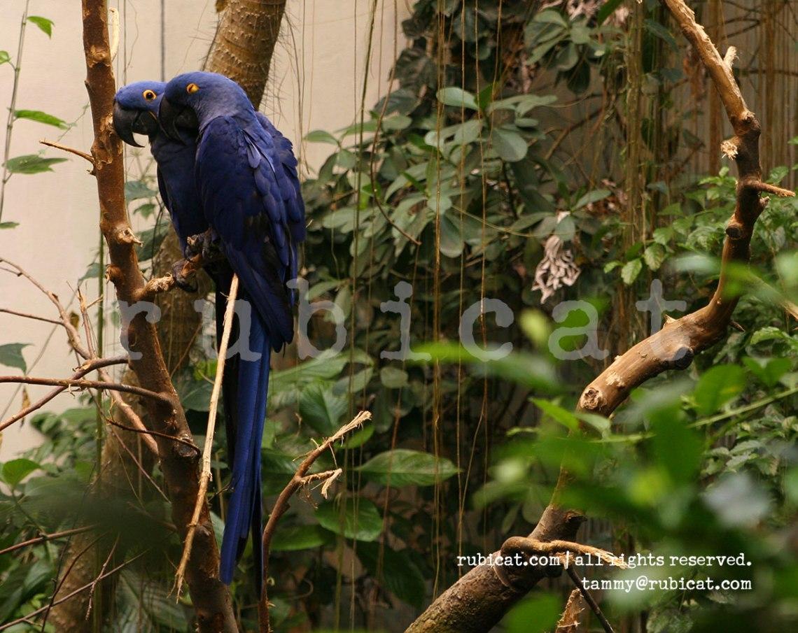 2008_macaws