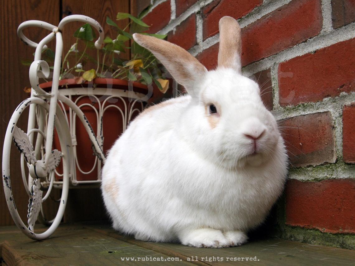2009_bunny