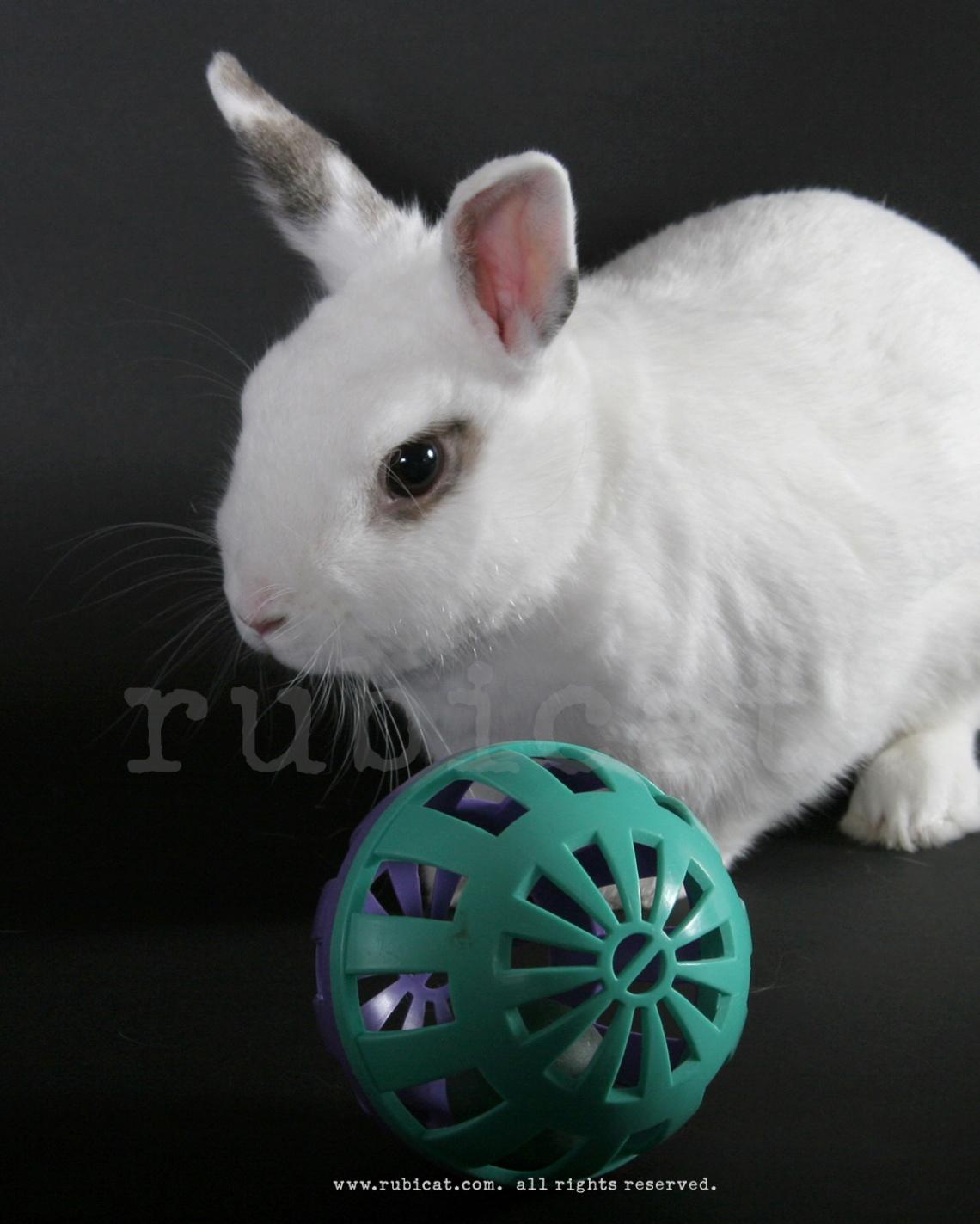 bunnycarrot