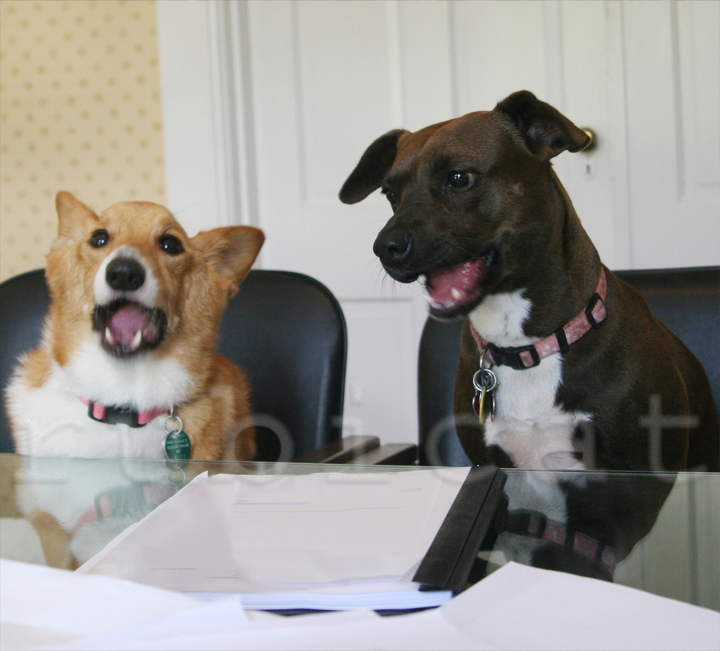 focus group dogs