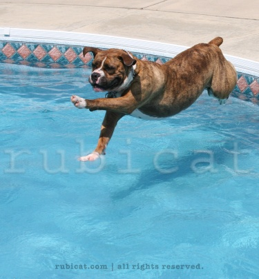 Floyd takes a swim