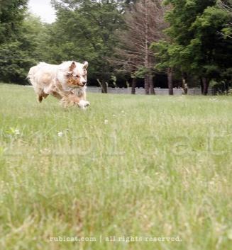 Bounding on acres of land: dog-nirvana.