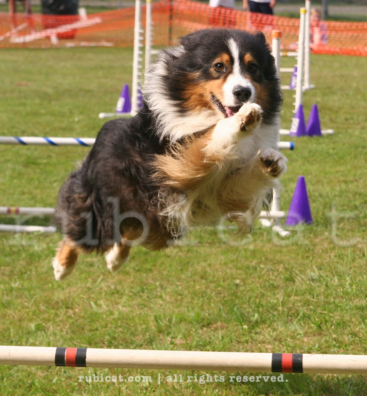 Agility course, Guilford, Vermont.